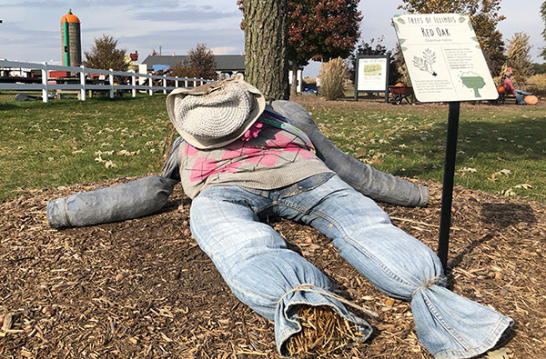 A Tired Scarecrow at Rader Family Farms
