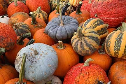 Rader Family Farms Amazing Pumpkins